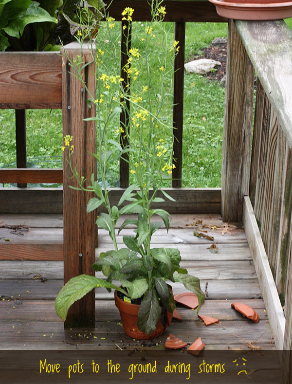 5 Tips for Successful Container Gardening from SoupAddict.com