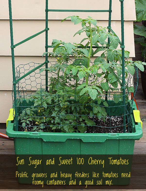 5 Tips for Successful Container Gardening from SoupAddict