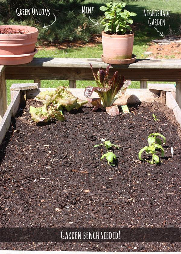 SoupAddict's Garden Bench