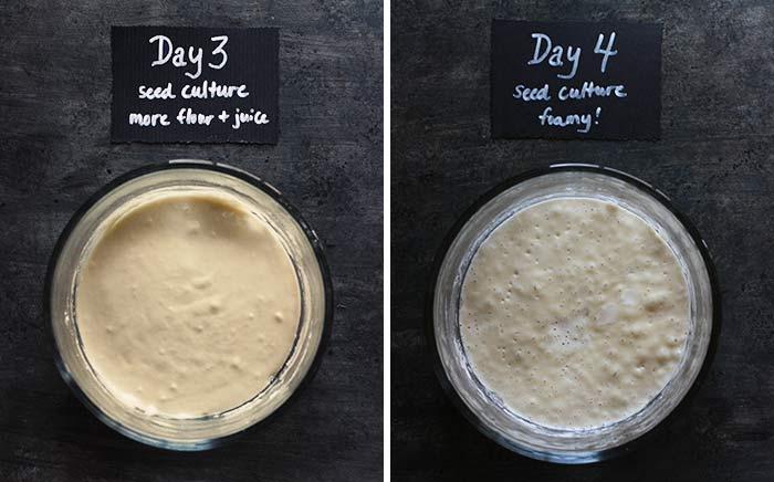 Sourdough Bread - Why It's Better Than Yeast - Gardenerd