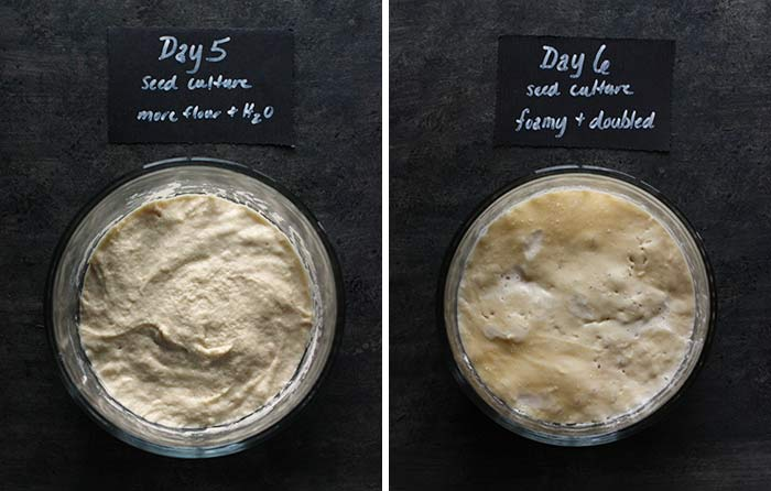 how to make a us-05 yeast starter